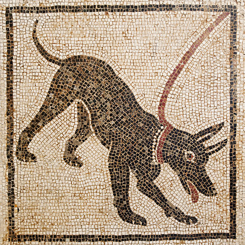 'Cave canem' (beware of the dog) mosaic.. From Pompeii, Casa di Orfeo, VI.14.20