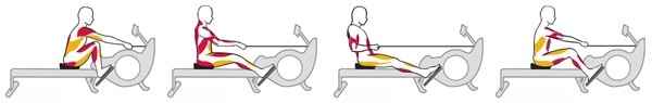 Spieren gebruiken tijdens het roeien